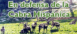 En defensa de la Cabra Hispánica